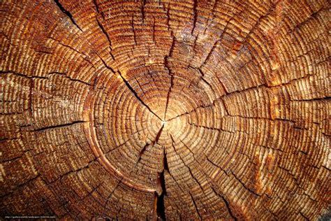wallpaper section download wallpaper tree log section free desktop