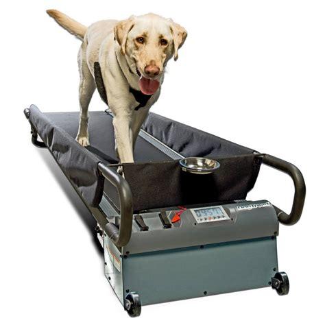 treadmill for dogs doggie treadmill run spot run technabob