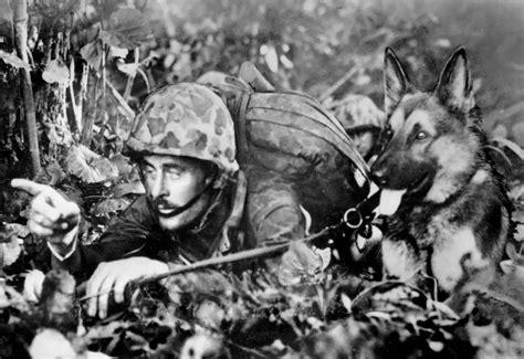 world war ii pictures in details marine war and handler
