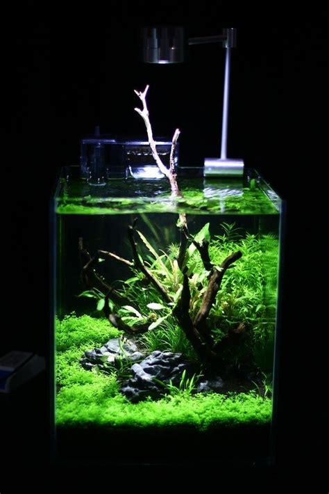 How To Set Up An Aquascape by 25 Best Ideas About Nano Aquarium On Betta