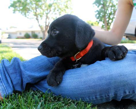 pound puppy rescue pound puppy rescue 23 photos 46 reviews pet services palo alto ca united