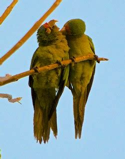 Aaaah All Settled by Marina Chahu 233 In Huatulco Communing With The Parrots