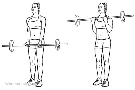 Barbel Curl barbell curl standing biceps curl illustrated exercise