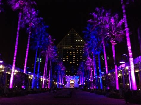 light up palm trees for sale uplighting palm trees event lighting