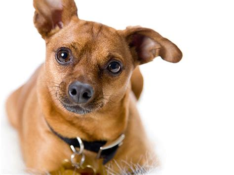 Dogs Volunteering With Dogs Petfinder
