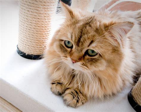 best little cat house cute little cat in the house wallpaper 1280x1024 resolution wallpaper download