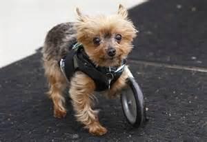The three legged dog with wheels named hope birds ducky cat donkies