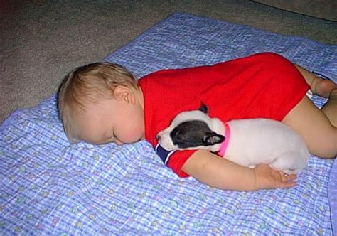 puppy and baby sleeping baby and fallen asleep together