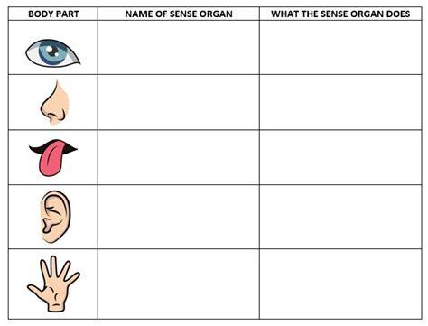 5 senses worksheets the five senses worksheets the homeschooler