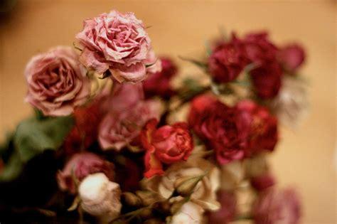 imagenes de rosas secas ramos de flores secas
