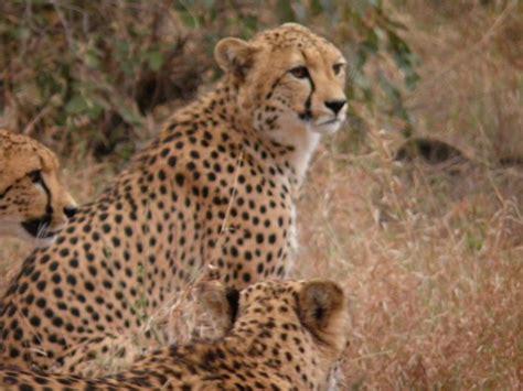 sudafrica turisti per caso perle d africa viaggi vacanze e turismo turisti per caso