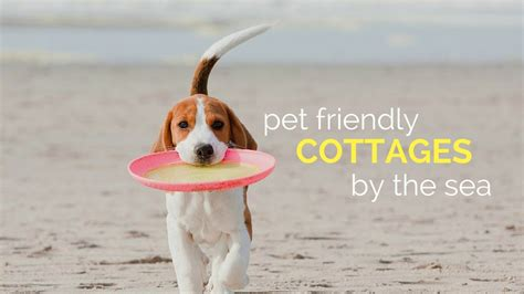 Pet Friendly Cottages By The Sea last minute pet friendly cottages by the sea snaptrip