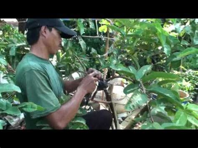 Bibit Pohon Zaytun Bidara Dan Tin Sepaket 3 Pohon bibit pohon bidara doovi