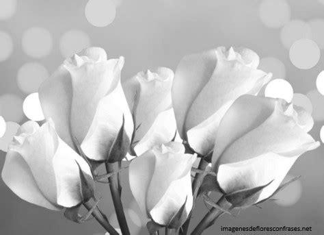 imagenes de luto dolor im 225 genes de rosas de luto rosas negras con frases de dolor
