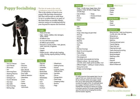 new puppy supplies list 1000 ideas about new puppy checklist on new