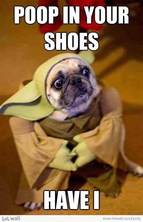 pug dressed up as yoda yoda pug jess s random board