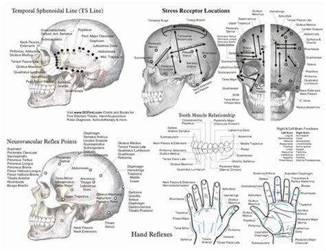 atlas of acupuncture points chiro 12 best reflex points images on pinterest