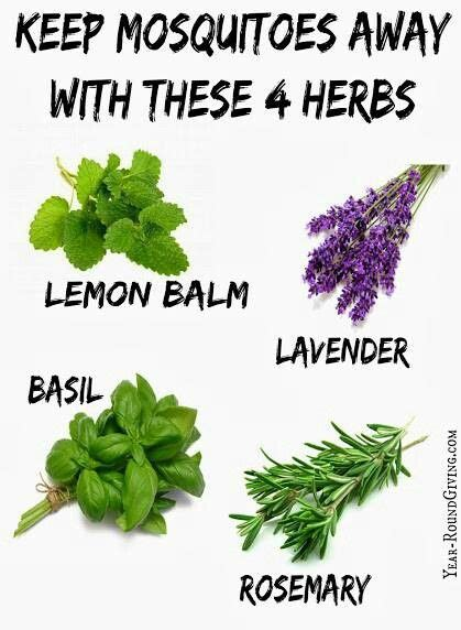plants that keep mosquitoes away 1000 ideas about homemade mosquito repellant on pinterest