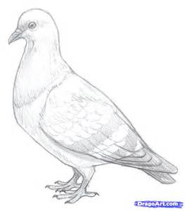 How To Draw Pigeons Step By Step Birds Animals Free