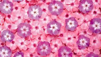 Pictures Of Pink Flowers - pink wallpapers hd pixelstalk net