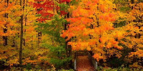 michigan fall colors steve q photo michigan fall color 2012 day 1 grayling