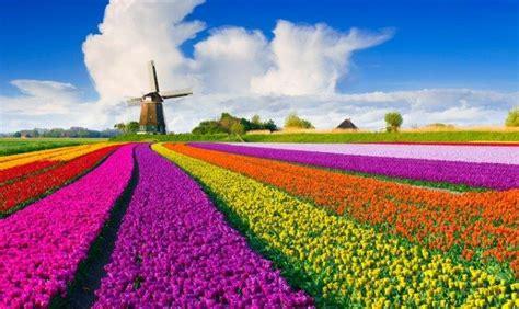 olanda fiori l olanda dei tulipani i percorsi pi 249 belli