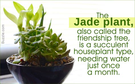 succulent house succulent houseplants to make your home interiors look
