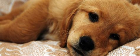 coronavirus in dogs coronavirus in dogs pet health information