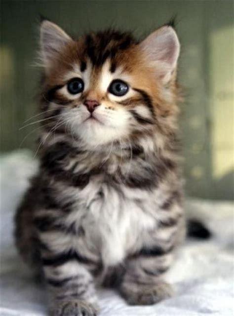 imagenes gratis tiernas im 225 genes tiernas de animales gratis fotos de gatos