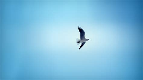 flying on beautiful bird flying in sky hd wallpapers 1080p