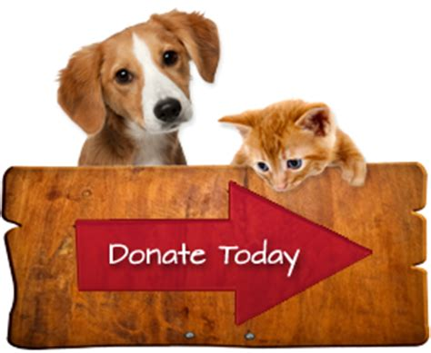 Spring Cleaning List by Orange County Humane Society Pet Adoption In Huntington