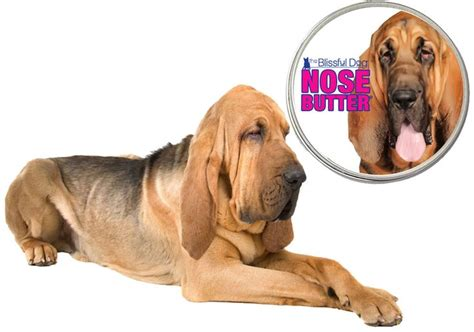 Bloodhound Shedding by 1000 Images About The Blissful Bloodhound On Shops Butter And Primary Colors
