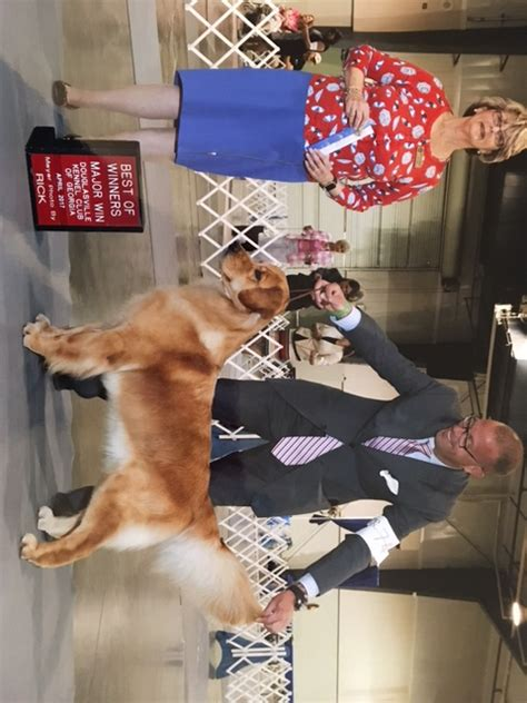 top golden retriever breeders in the midwest best golden retriever breeders in the northeast photo