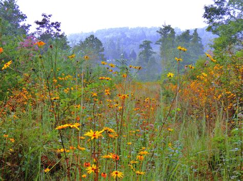 wildflowers that bloom in the fall september wildflowers of otter creek valley living in