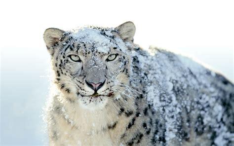 the apple mac os x snow leopard desktop wallpaper