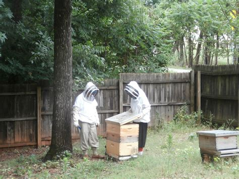 beekeeping backyard backyard beekeeping for beginners home design