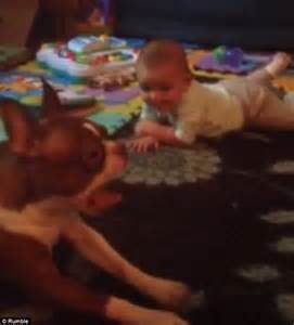 dragging back legs pet teaches baby how to crawl by dragging itself along the floor daily mail