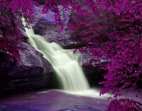 beautiful waterfalls with flowers purple flowers surrounding a beautiful waterfall