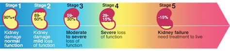 kidney disease info  stages