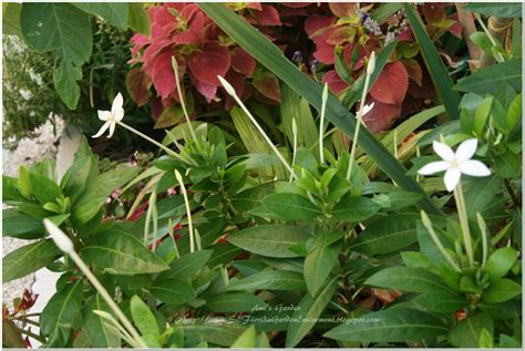 southeast florida garden evolvement daylily