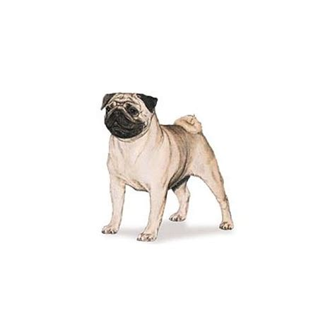 clothes for pugs and accessories pug kuka s world designer clothes and luxury accessories for pets