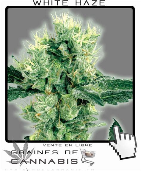 graines de cannabis du meilleur cannabis autoflo