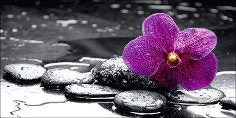 orchidea in da letto sta su tela moderna orchidea black