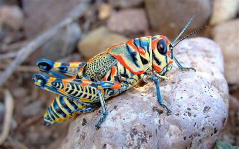 colorful bugs top 6 colorful bugs bugs bugs