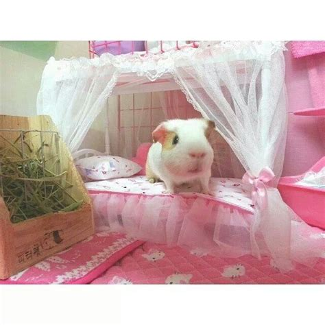 guinea pig bedding ideas 17 best images about guinea pig sewing on pinterest