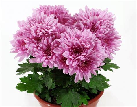 Lu Hias Warna Warni 8 jenis tanaman hias daun untuk suasana rumah lebih hidup
