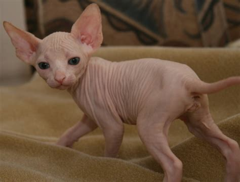 Pictures Of Ugly Kittens   Pictures Of Animals 2016