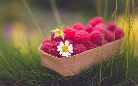 flower foods sweet raspberries berry flower hd wallpaper