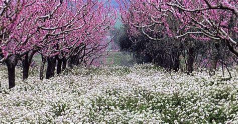 siamo come fiori prima di vedere il sole a primavera il mondo e tutto il resto la vita primavera