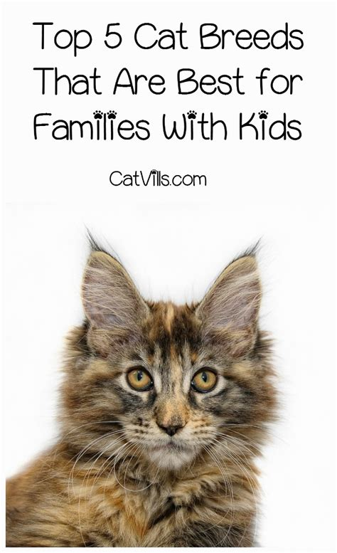 best breeds for cats top 5 overall best cat breeds for children catvills